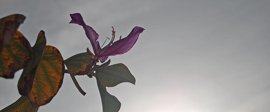Orchid Tree Photograph - Have Faith by Jean Booth