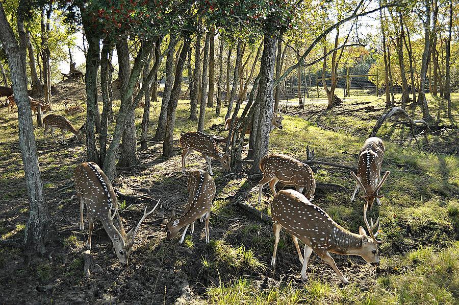 Deer Photograph - Haven by John Collins