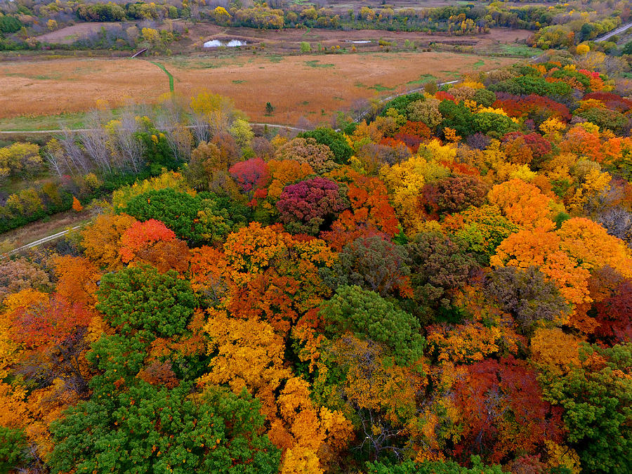 Milwaukee Photograph - Havenwoods State Forest by Steve Bell