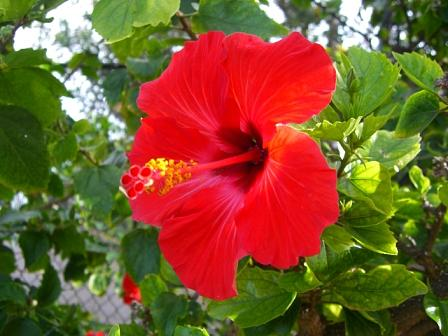 Hibiscus Photograph - Hawaii Dream Come True by Wendy Lippard
