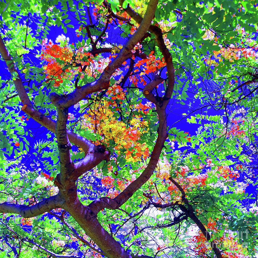 Flowers Photograph - Hawaii Shower Tree Flowers In Abstract by D Davila