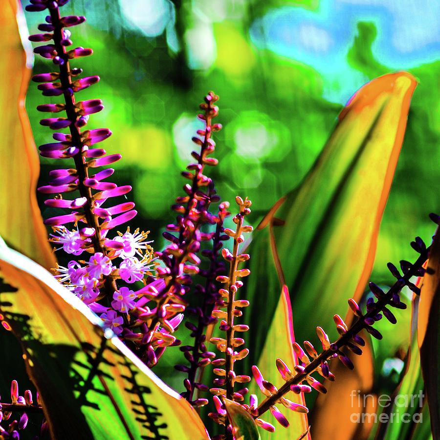 Ti Photograph - Hawaii Ti Leaf Plant And Flowers by D Davila