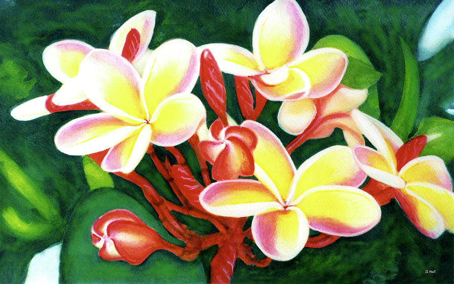 Plumeria Painting - Hawaii Tropical Plumeria Flower #205 by Donald k Hall