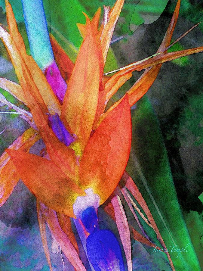 Bird Of Paradise Digital Art - Hawaiian Abstract by James Temple