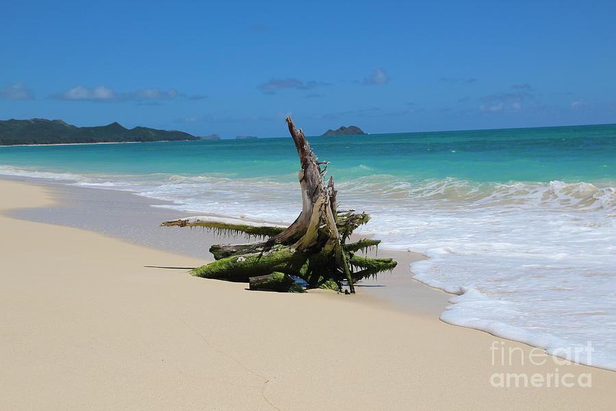 Hawaiian Beach Photograph by Anthony Jones