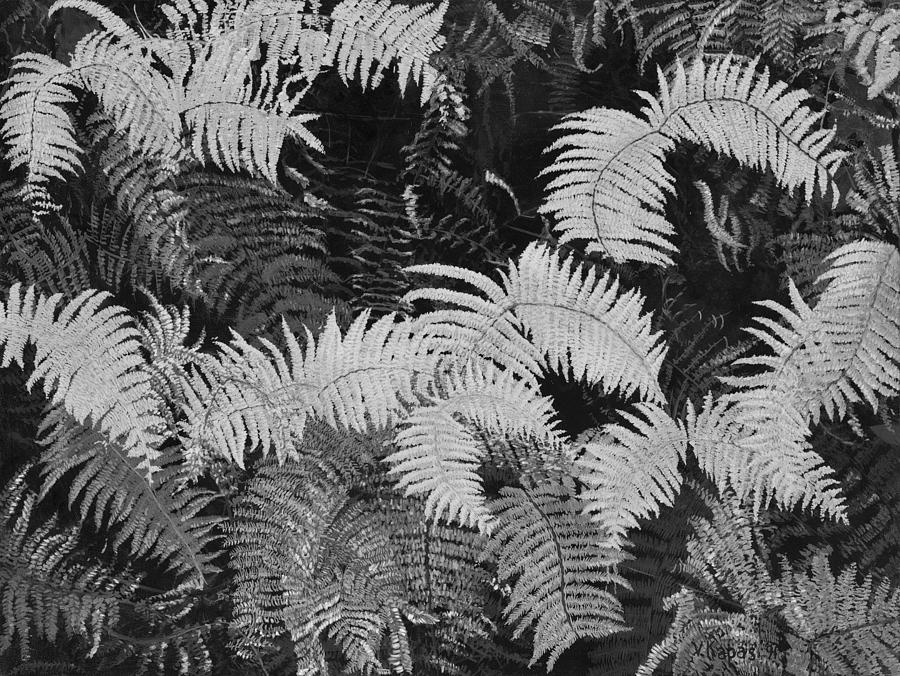 Hawaiian Ferns Photograph By Victor Kapas