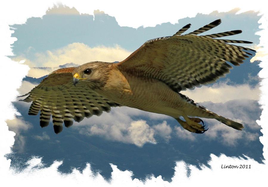 Red-tailed Hawk Digital Art - Hawk On The Wing by Larry Linton