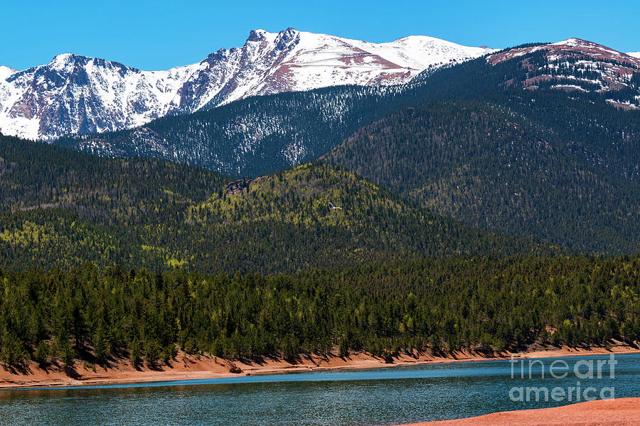 Hawk Over Crystal Reservoir And Pikes Peak Photograph