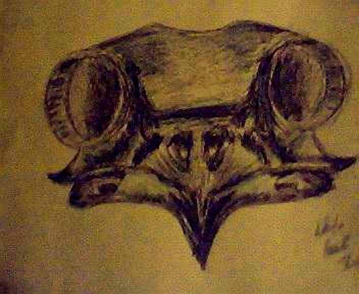 Wildlife Drawing - Hawk Skull by Tiffany Lammers