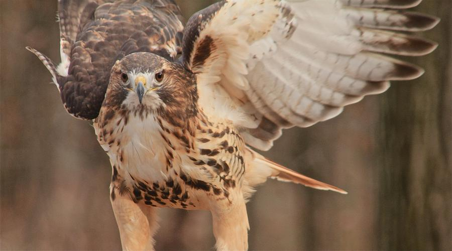 Bird Photograph - Hawked by Linda Asparro