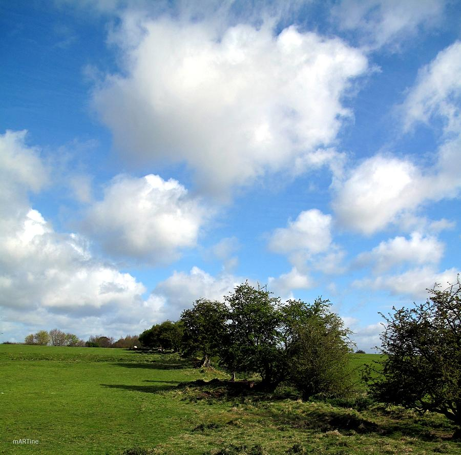 Hawthorn Treeline Photograph