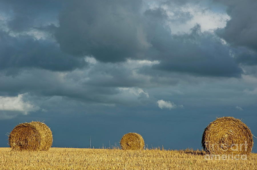 Agricultural Photograph - Hay Bales In Harvested Corn Field by Sami Sarkis