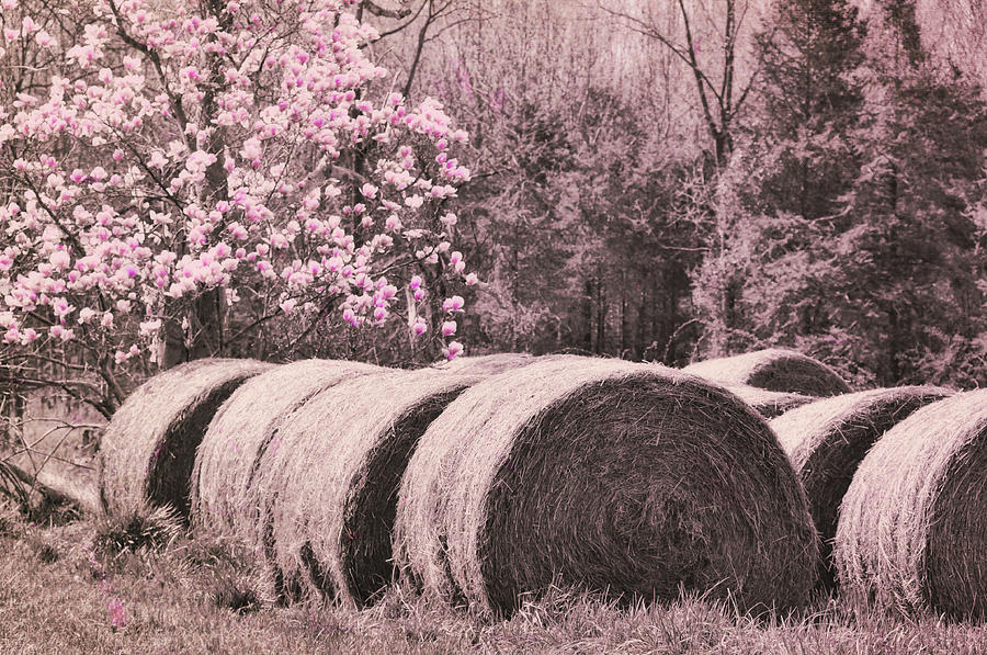 Hay Photograph - Hay Bales by JAMART Photography