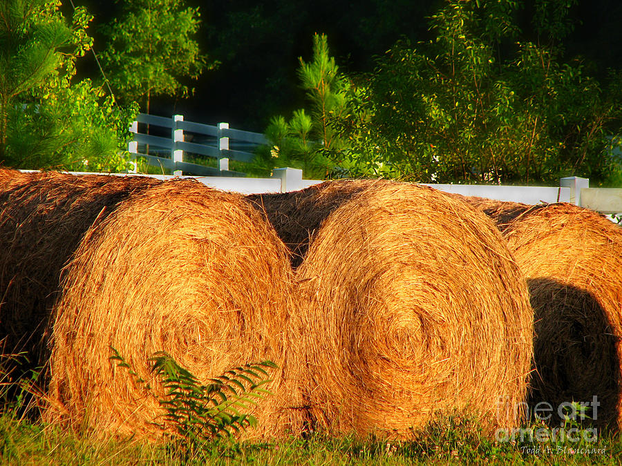 Landscape Photograph - Hay Bales by Todd A Blanchard