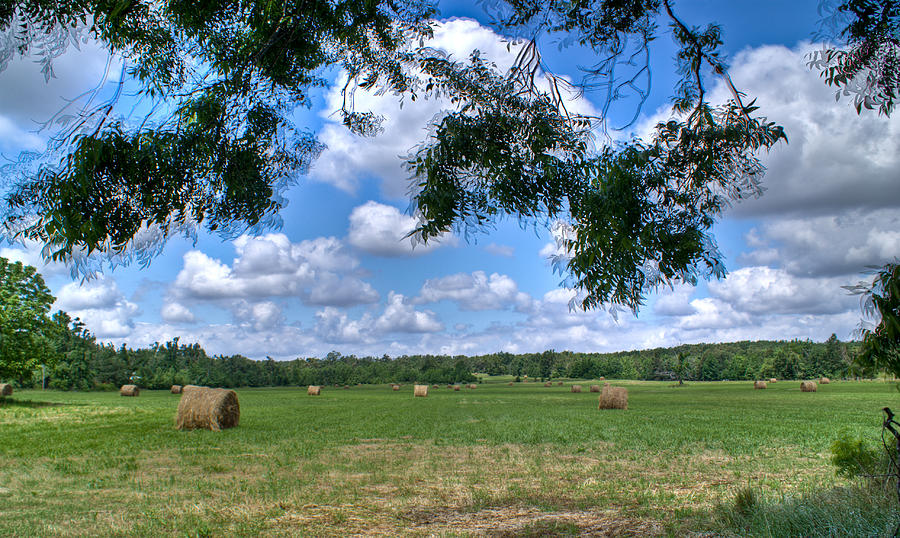 Hay Photograph - Hay Field In Summertime by Douglas Barnett