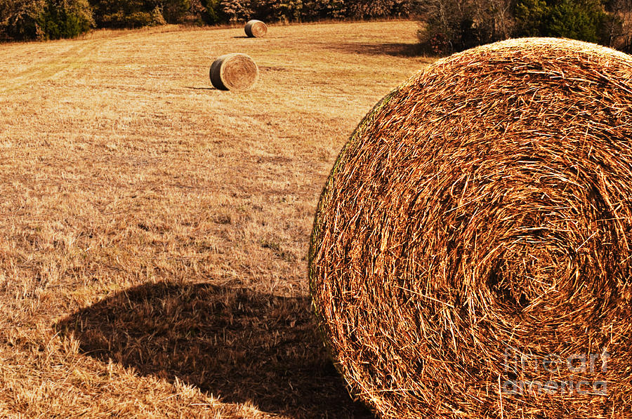 Nature Photograph - Hay In The Field by Tamyra Ayles