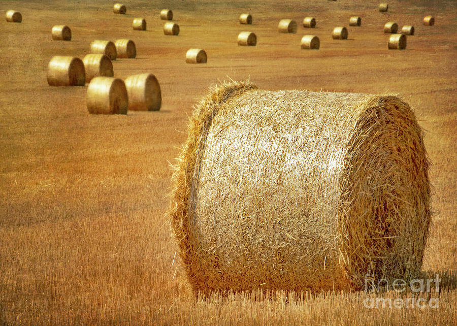 Hay Photograph - Haystacks by Hal Halli
