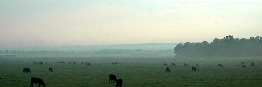 Herd Photograph - Hazy Grazing by Lynn Reid
