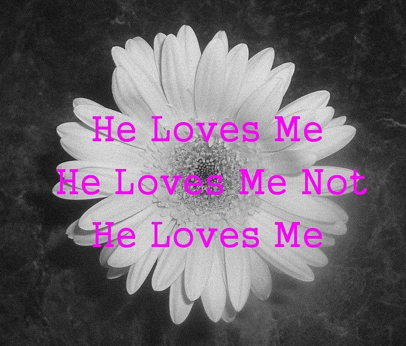 Daisy Photograph - He Loves Me by JoAnn Tavani