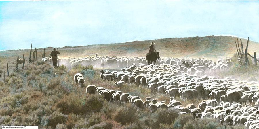 Sheep Photograph - He Maketh Me To Walk by Chery Ehresman
