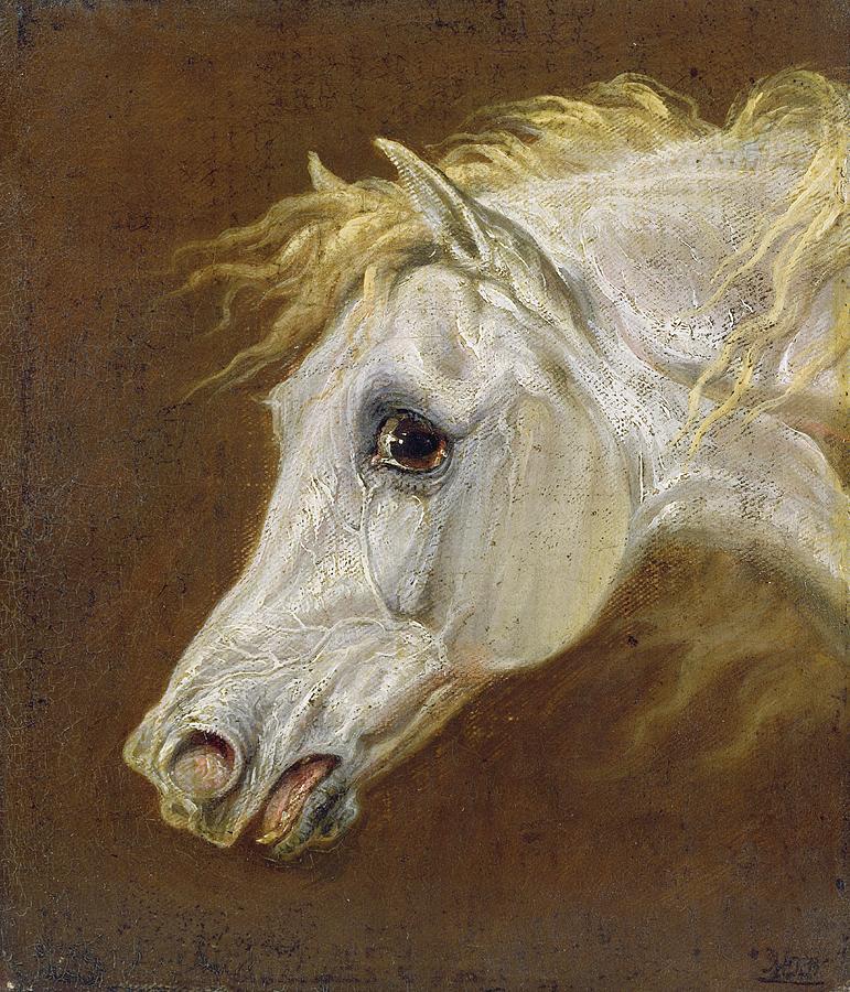 Head Painting - Head Of A Grey Arabian Horse  by Martin Theodore Ward
