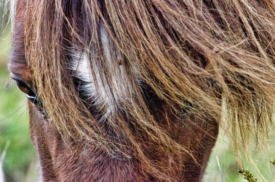 Head On Close Up by Jennifer Stockman