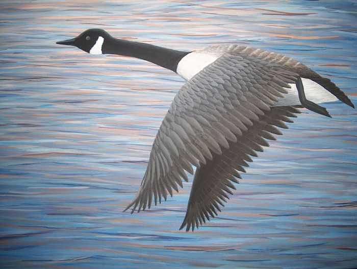 Canada Goose Painting - Heading West by Cedric Colond