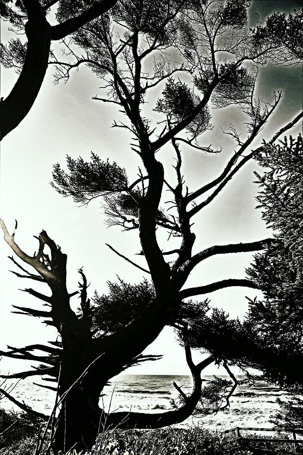 headland trees by Sheila Ping
