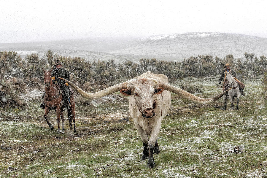 Longhorn Cattle Photograph - Headn Home by Pamela Steege