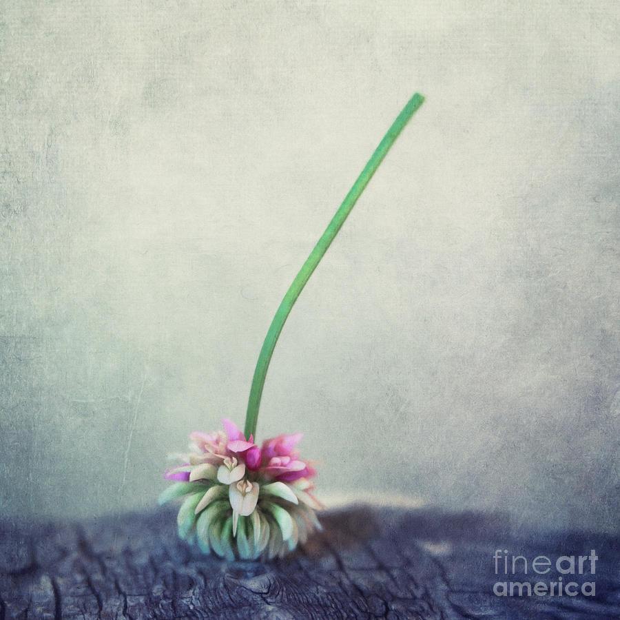 Clover Photograph - Headstand by Priska Wettstein