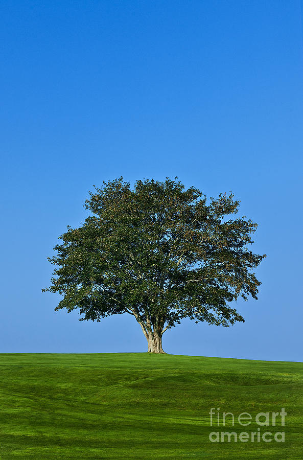 Business Photograph - Healthy Tree by John Greim