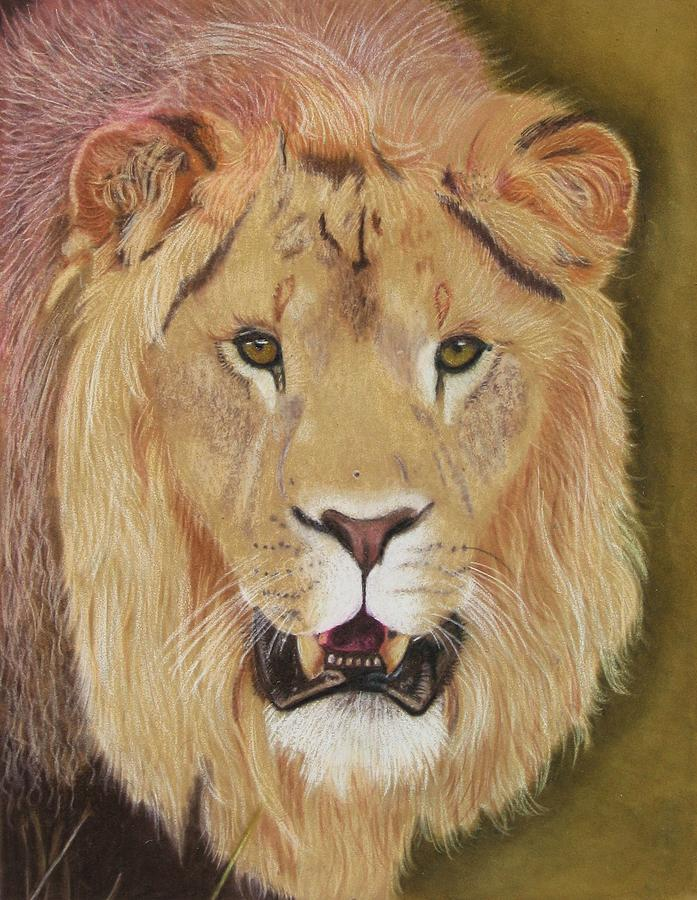 Lion Drawing - Hear Me Roar by Lori Hanks
