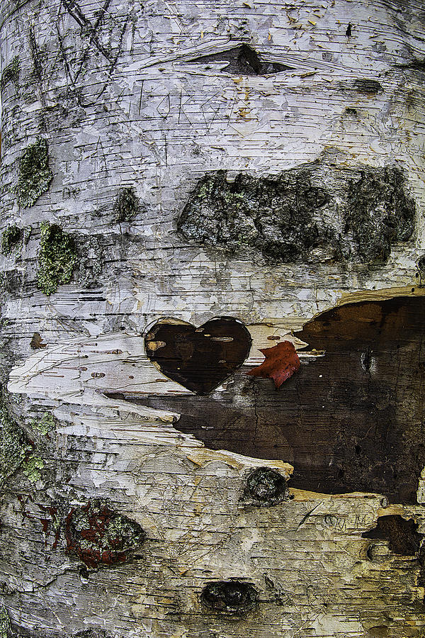 Heart Photograph - Heart Carved In Tree by Garry Gay