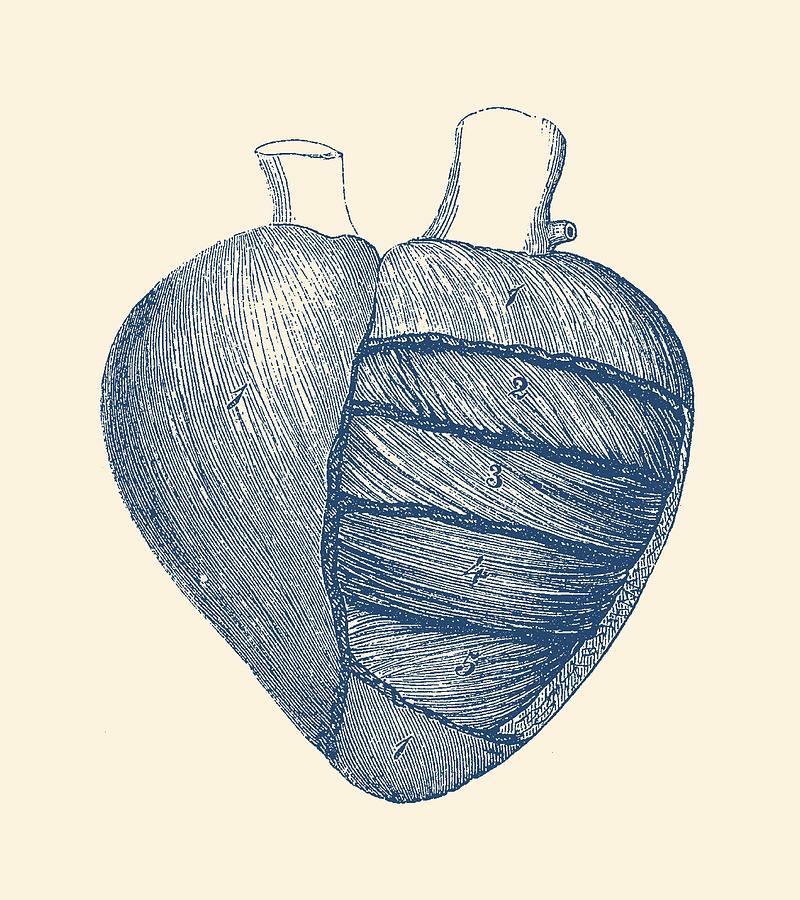 Fine Vintage Anatomy Prints Pattern Human Anatomy Images