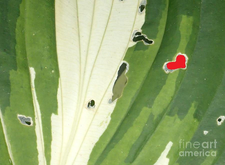 heart in nature by Christina Verdgeline