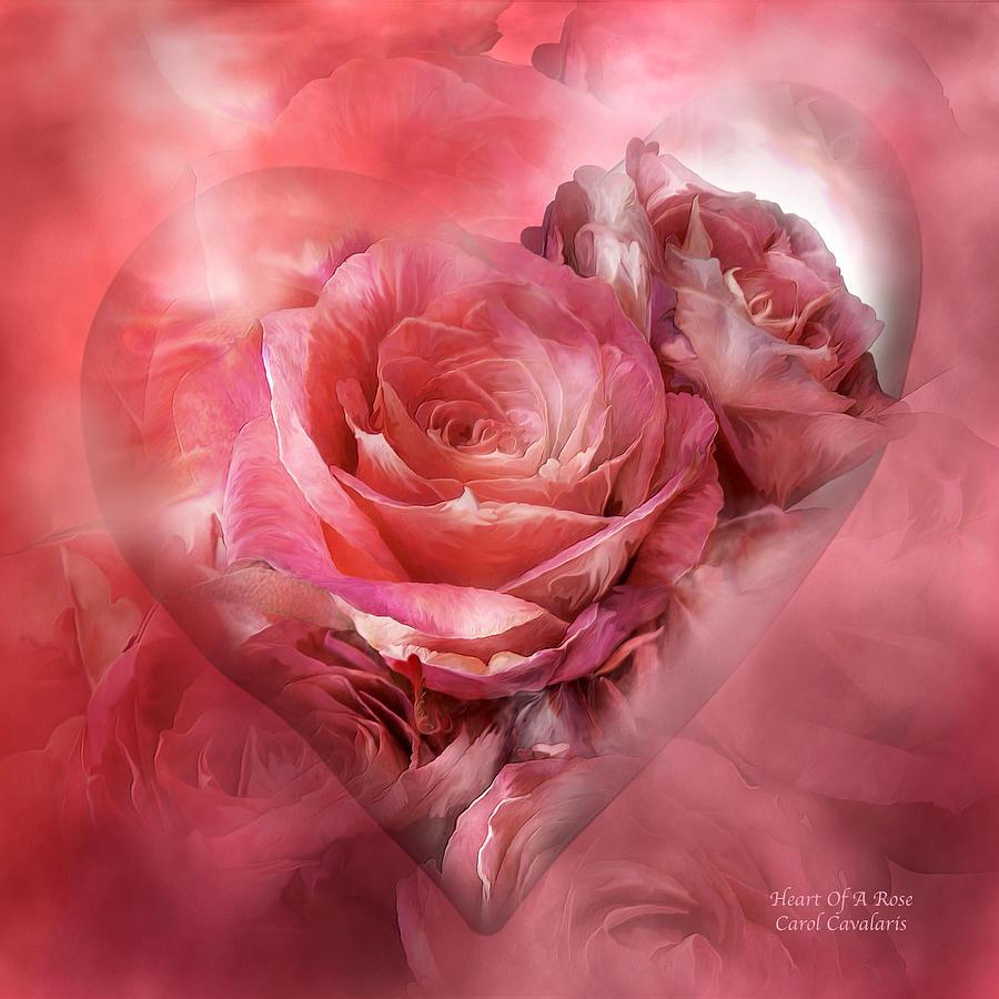 Heart Of A Rose - Melon Peach Mixed Media by Carol Cavalaris