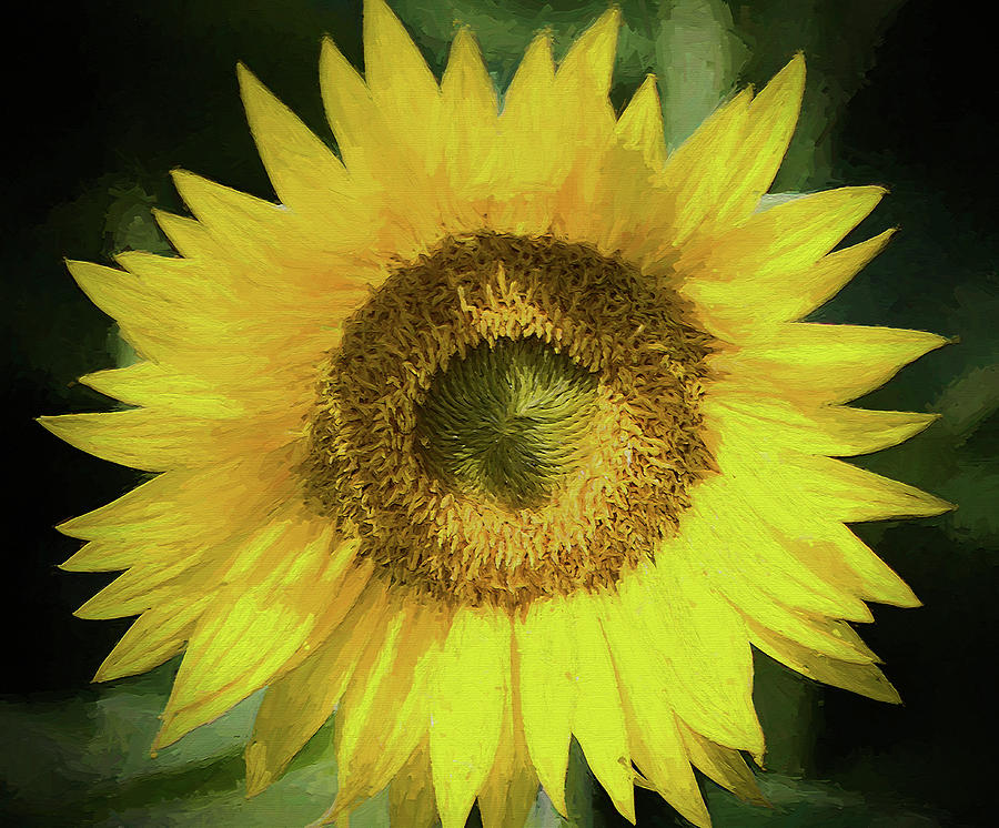 Sunflower Photograph - Heart Of Gold Sunflower by Kathy Clark