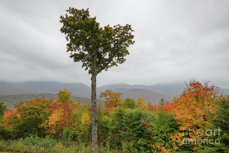 Heart Tree - Kancamagus Highway, New Hampshire by Erin Paul Donovan