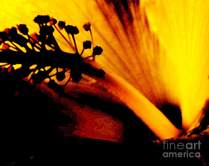 Flower Photograph - Heat by Linda Shafer