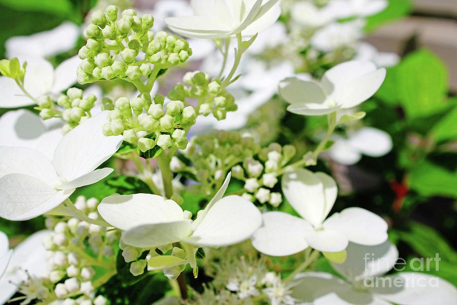 Heavenly Flower Photograph