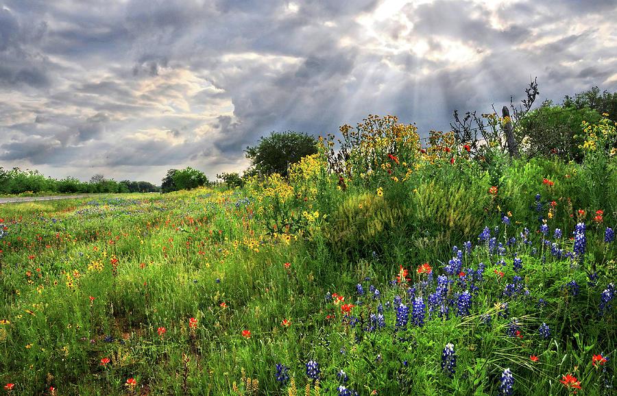 Wildflowers Photograph - Heavens Light  by Lynn Bauer