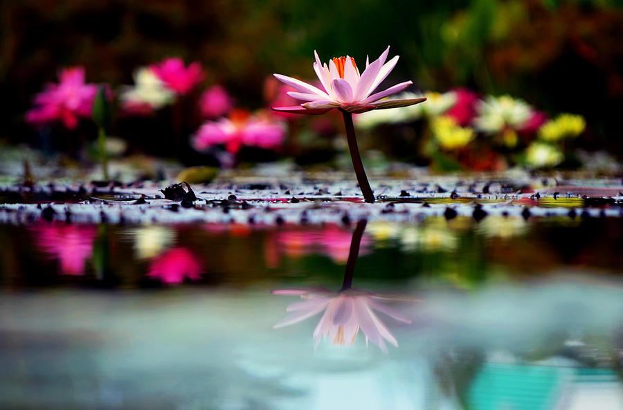 Flower Photograph - Heavens Masterpiece by Melanie Moraga