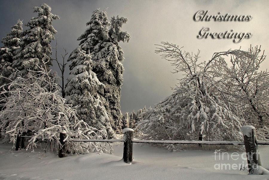 Christmas Photograph - Heavy Laden Christmas Card by Lois Bryan