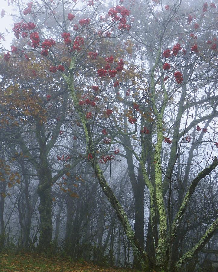 Misty Photograph - Heavy Mist by Cindy Gacha