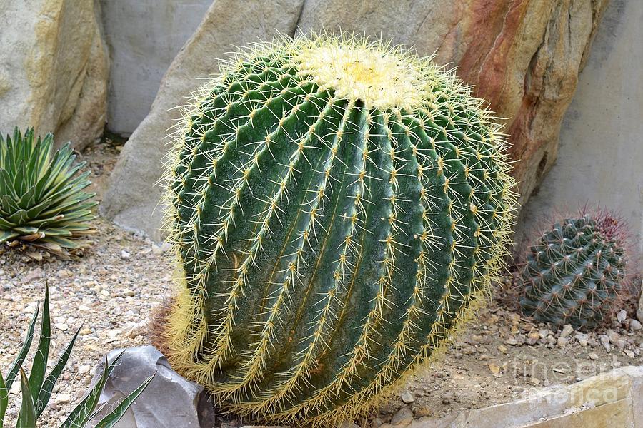 Hedgehog Cactus by James Fannin