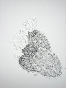 Print Drawing - Hedgehog by Joanie Arvin