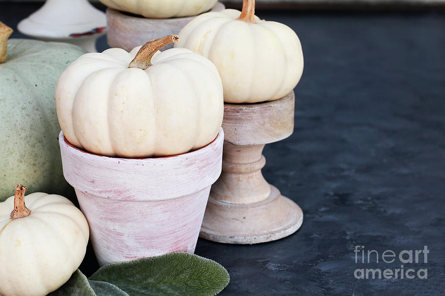 Heirloom and Mini Pumpkins on Rustic Table by Stephanie Frey