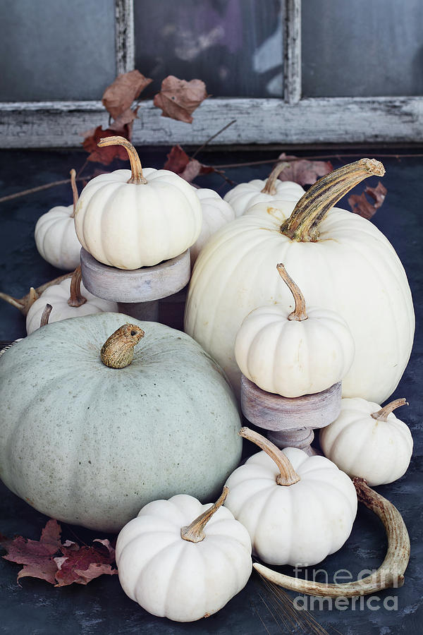 Heirloom Pumpkins and Antlers by Stephanie Frey