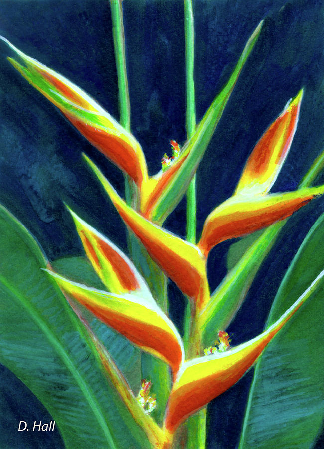 Hawaiian Flowers Painting - Heliconia Flowers #249 by Donald k Hall