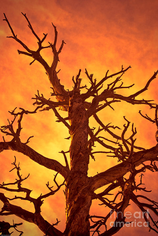 Hell Photograph - Hell by Charles Dobbs